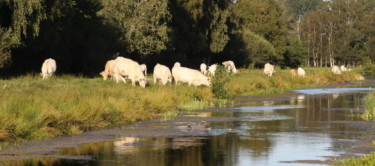 Kühe in Neu Wulmstorf